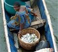 Trading Fish...