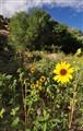 Wide flowers