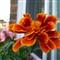 Windowbox Flower