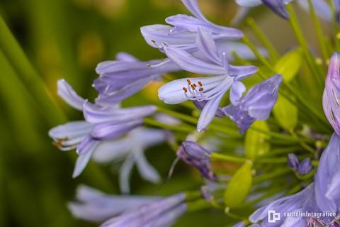 20130525_teste-fotos-Canon-70D_IMG_0013