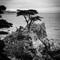 Lone Cypress-bw-72