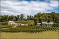 virginia winery