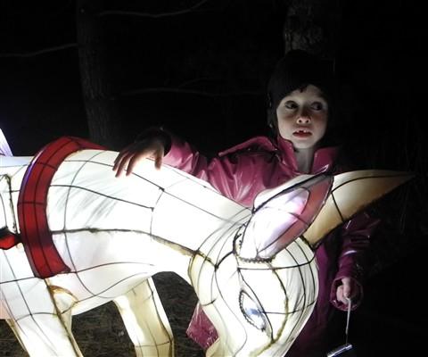 magic of lanterns at the botanical gardens