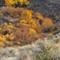 102516 Cowiche Canyon