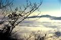 Piedmonte, Langhe Hills with fog
