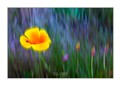 Wild Flowers with Ladybug