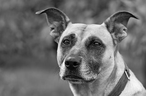 detail dog