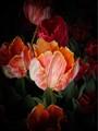 Tulipfest1600