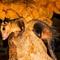 manicou in Tamana Bat Cave Trinidad & Tobago