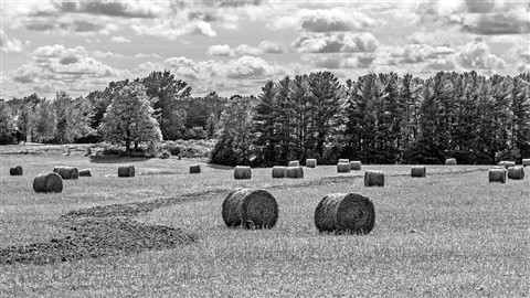 _7052365 F50 Bales of Hay