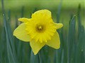 soft in spring