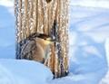Frozen Heron