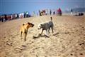 Dogfight!