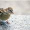 Curiosity of a Beautiful Bird