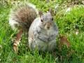 spare a peanut, sir?