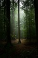 Forest in the rain