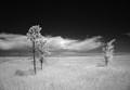 Prairie Infrared