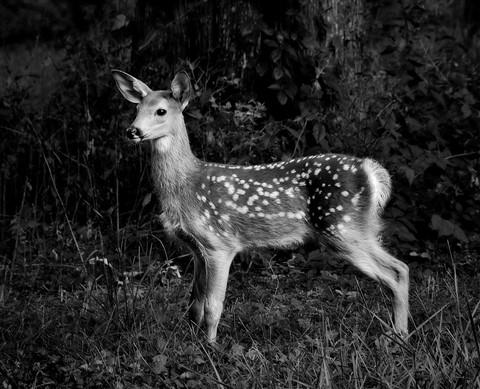 Bambi 2012 DSC_7800-mod-faa