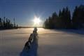 dog sleigh in Quebec