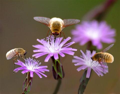 3-bees-web