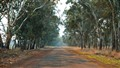 Gum tree lined outback road