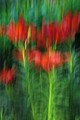 Garden Lilies, ICM, Single Shot, Light Edit