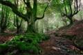 Subject trees