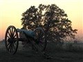 Gettysburg Cannon and Tree