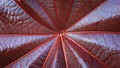 The geometry and texture of red leaf