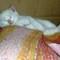 Feral White kitten