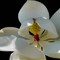 Magnolia Improper 16x20sm