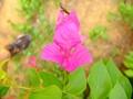 Flower-Portrait(photobombed)