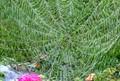 web in garden