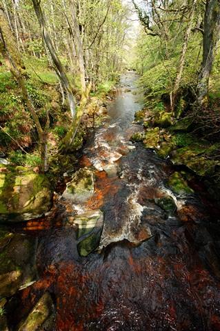 Devilswater below Red Lead Mill bridge