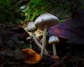 Fungi Mood