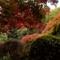 Mt Tomah in Autumn