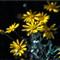 Yellow Daisies 1280w