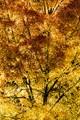 Autumn-8925