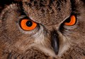 Eye of the Eagle (owl)