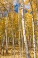 Colorado Autumn Color