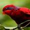 2013-08-15 - Jurong Bird Park-3745