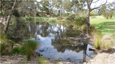 Wittunga Botanical Gdns Blackwood Sth Australia