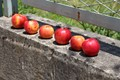 Matka Canyon near Skopje, Macedonia. Taken as observed, no idea why these apples had been placed on the wall.