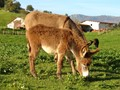 Donkeys under the sun