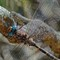 dragonfly14