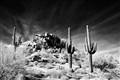 Tres Saguaro