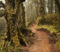 Mossy forest panorama