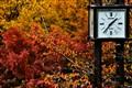 It's Autumn time !