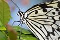 2014-butterflies-4923