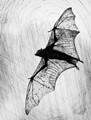 Bat Scratch